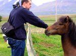 chevaux_-_2.jpg